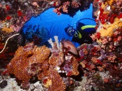 Underwater: Coral Reef, Scuba Diver