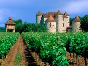Vineyard, Cahors, Lot Valley, France