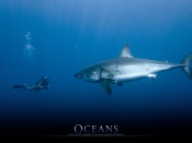 Oceans Movie - Dancing with Sharks