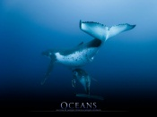 Oceans Movie by Jacques Perrin and Jacques Cluzaud