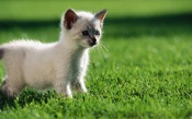 Curious Kitten on the Grass