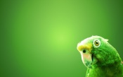 Disheveled Parrot, Green Background