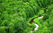 Small River in Dense Green Forest