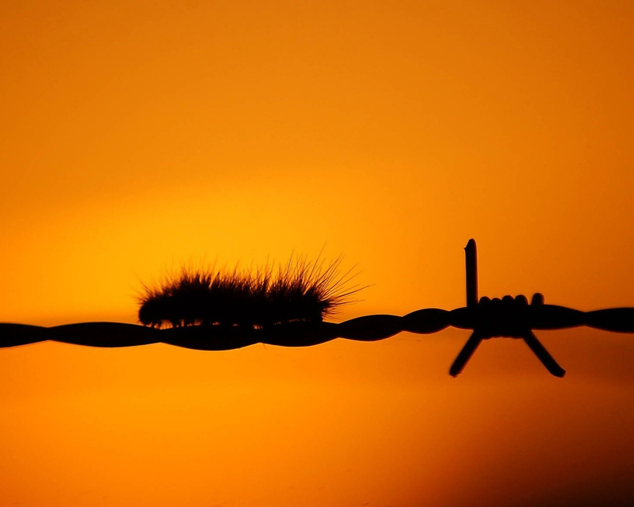 Caterpillar on a Wire