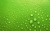 Drops of Water on the Green Skin