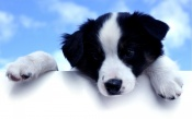 Cute black and White Dog