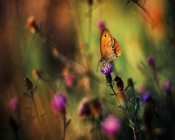 Butterfly at work (bokeh)